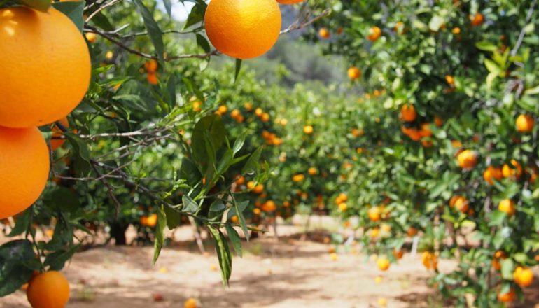Futuro del sector hortofrutícola