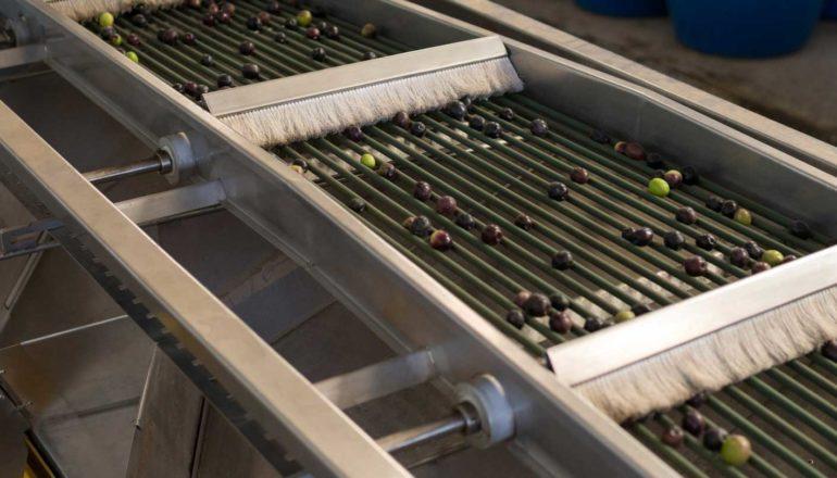 Inteligencia Artificial en la clasificación de aceitunas frescas