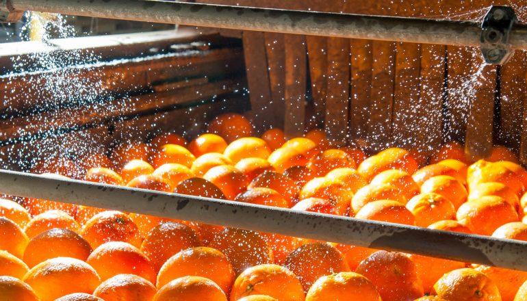 Lavado de naranjas